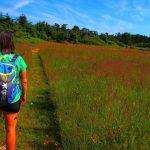 DI trail