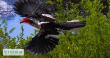 Tarangire birds